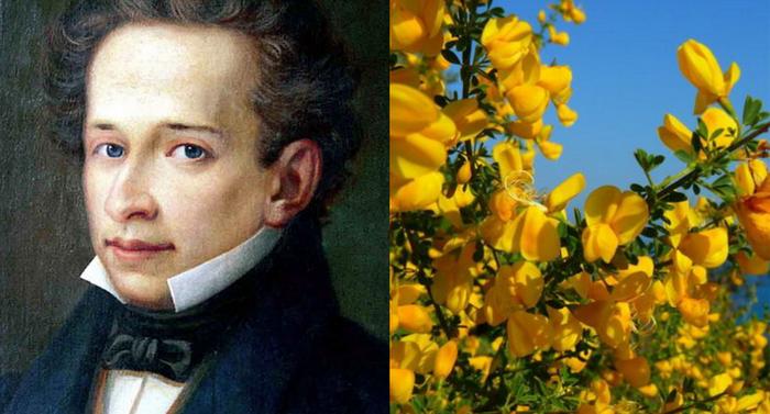 Giacomo Leopardi - La ginestra o Il fiore del deserto
