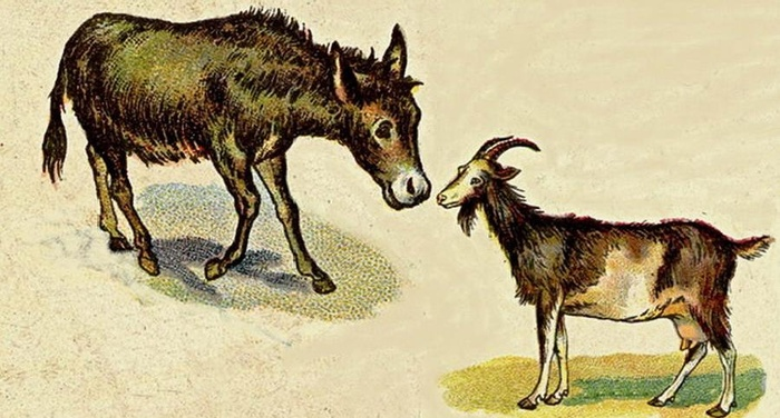 Esopo - La capra e l'asino