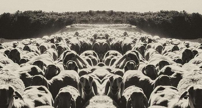 Friedrich Nietzsche - Osserva il gregge che pascola davanti a te