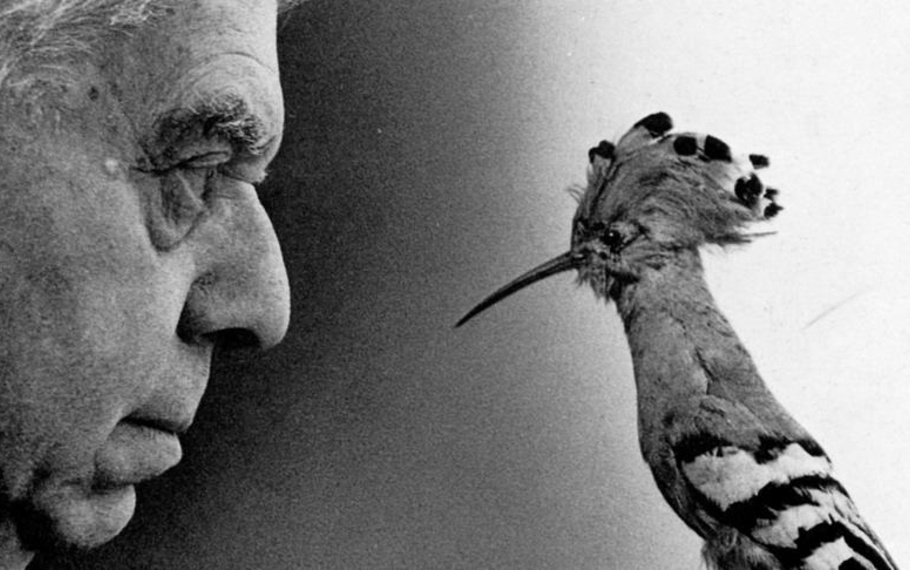 Eugenio Montale - Non ho mai capito se io fossi