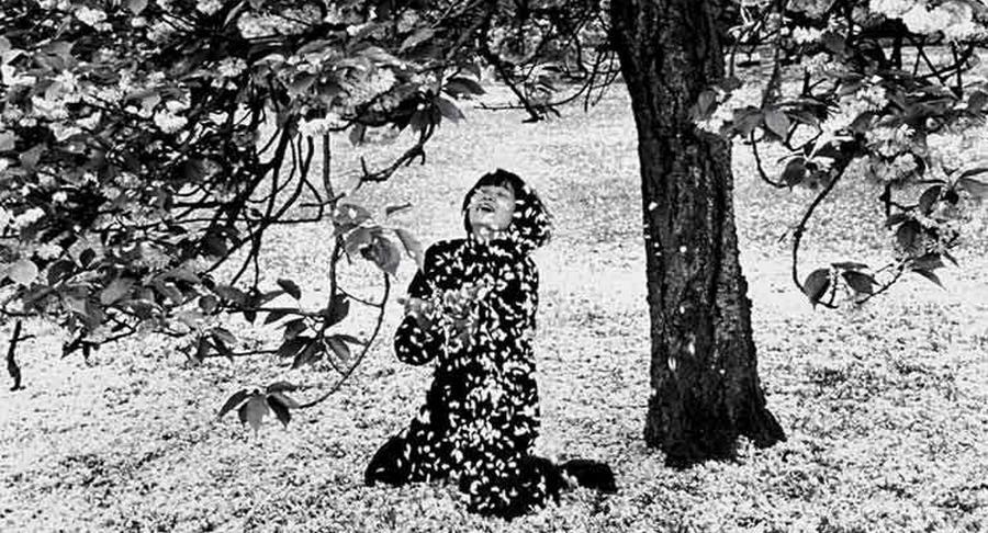 Sandro Penna - Il mio fanciullo ha le piume leggere