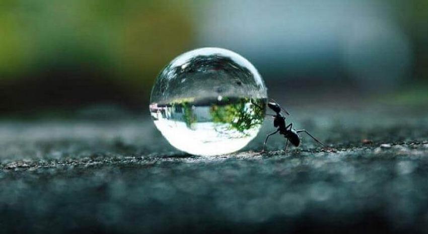 Napoleon Hill - Le quattro fasi della perseveranza